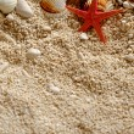 Sea shells on the sand. — Stock Photo #78678542