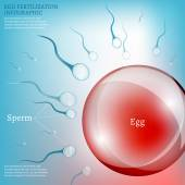 Egg Fertilization — Stock Vector