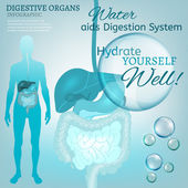 Digestive System — Stock Vector
