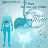 Sistema digestivo — Vector de stock