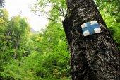 Blaues Kreuz Wandern und trekking-symbol — Stockfoto