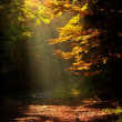 Sunlight falls on a forest road in autumn — Stockfoto #55408143