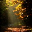 Sunlight falls on a forest road in autumn — Stock Photo #55408143