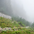 Fog on a mountain valley — Stock Photo #56406095
