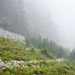 Fog on a mountain valley — Stock Photo #56406095