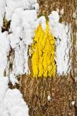 Hiking trail in winter — Photo