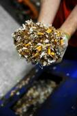Destroyed counterfeited cigarettes — Stock Photo