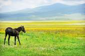 Horse on a plain in summer — Stock Photo