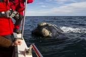 Whale near the  boat — Stock Photo