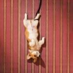 cão deitado no chão — Fotografia Stock  #67096189