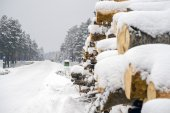 Logs are put on a roadside in winter — Foto de Stock