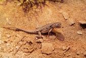 Australia, Zoology — Stock Photo