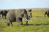 Kenya, Zoology — Stock Photo