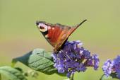 Zoology, Insects — Stock Photo