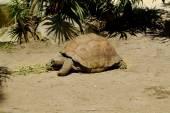 Zoology, Turtle — Stock Photo