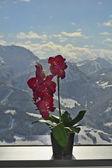 Autriche, hiver — Photo