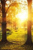 Picturesque autumn park — Stock Photo
