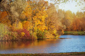 Autumn park by the lake. — Stockfoto