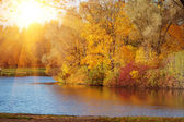 Autumn park by the lake. — Stock Photo