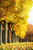 Picturesque autumn park — Stockfoto