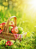 Rich organic apples in basket — Stockfoto