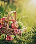 Rich organic apples in basket — Stock Photo