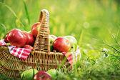 Rich organic apples in basket — Photo