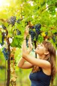 Woman holding grape bunch on vine — Stock Photo