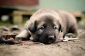 Sad puppy — Stock Photo