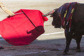 Bullfighter bullfighting with the crutch in the Bullring of Baez — Photo