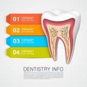 Dentistry info medical art — Stock Vector