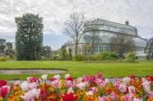 Estufa nos jardins botânicos nacionais — Foto Stock