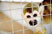 Monkey at the zoo — Stock Photo