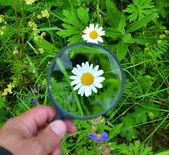 Flower through a magnifying glass — Fotografia Stock