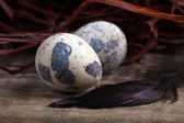 Quail egg lying on wooden surface close-up — Stock Photo