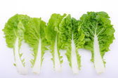 Romaine lettuce leaf isolated — Stockfoto