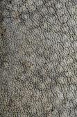 Rhino skin texture background — Stock Photo