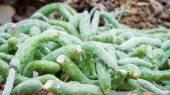 Cactus sur fond de rock — Photo