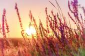 Vintage summer flowers on sunset, natural background with instag — Stockfoto