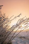 Tree branch covered by the first snow on sunrise, early morning  — Stock Photo