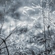 Early morning dew and frost on a grass, natural winter backgroun — Stock Photo #57091593