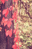 Autumn tree with re leaves in sunny forest, natural background w — Stock Photo