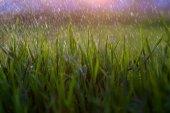 Rain, grass, dew, macro, green, summer, nature, environment, dro — Stock Photo