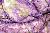Spring flowering tree, natural abstract  soft floral background — Stock Photo