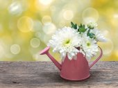 White bouquet flowers in watering can — Stockfoto