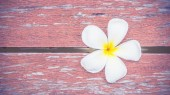 White flower Plumeria on wood floor — Stock Photo