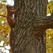 Squirrel on a tree trunk in the autumn forest. — Stock Photo #55155349