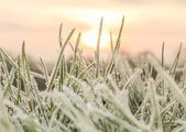 Cold Hard Frost — Stock Photo
