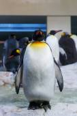 Large penguin standing as outsider — Stock Photo