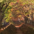 Постер, плакат: Maple Corridor at Nashigawa river Japan